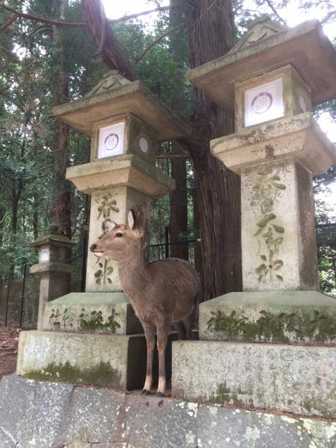 奈良 ならまち 住吉大社 東大寺 おおきな木_c0180209_20574616.jpg