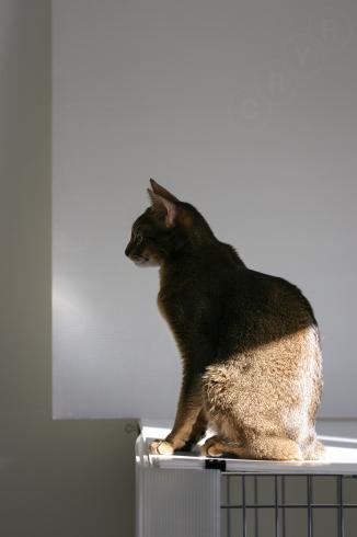 [猫的]朝の置物_e0090124_22573774.jpg