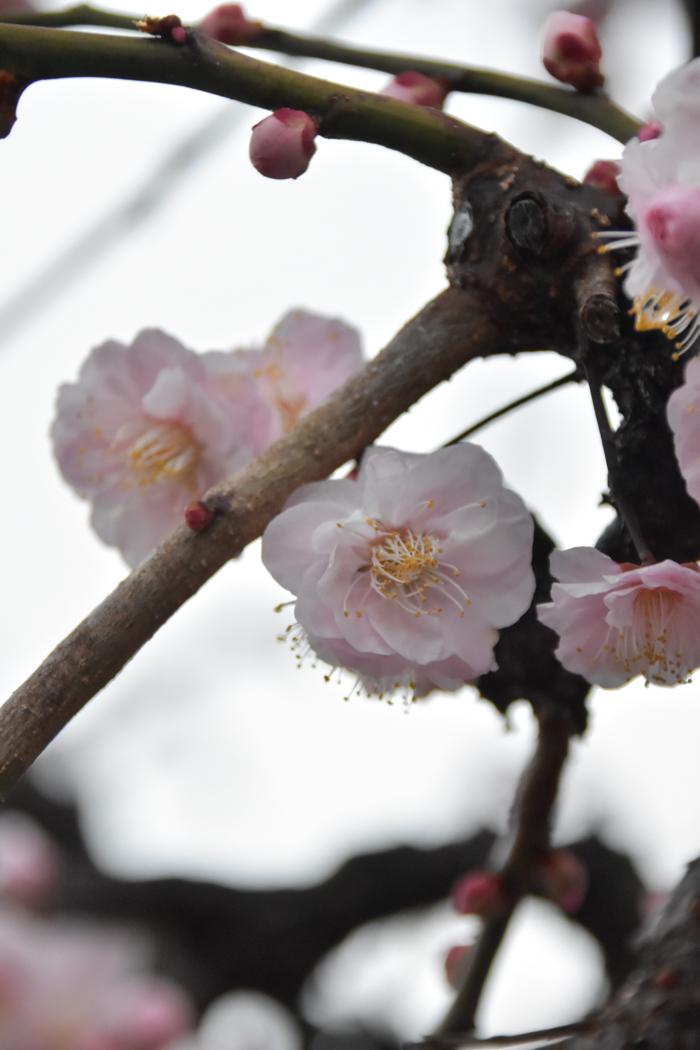春らんまん♡ いきもの祭り~♪ (^o^)_c0049299_21392382.jpg