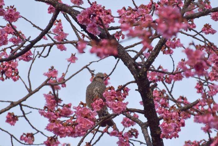春らんまん♡ いきもの祭り~♪ (^o^)_c0049299_21394384.jpg