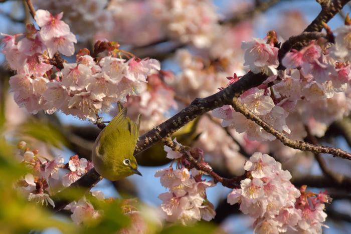 春らんまん♡ いきもの祭り~♪ (^o^)_c0049299_21405489.jpg