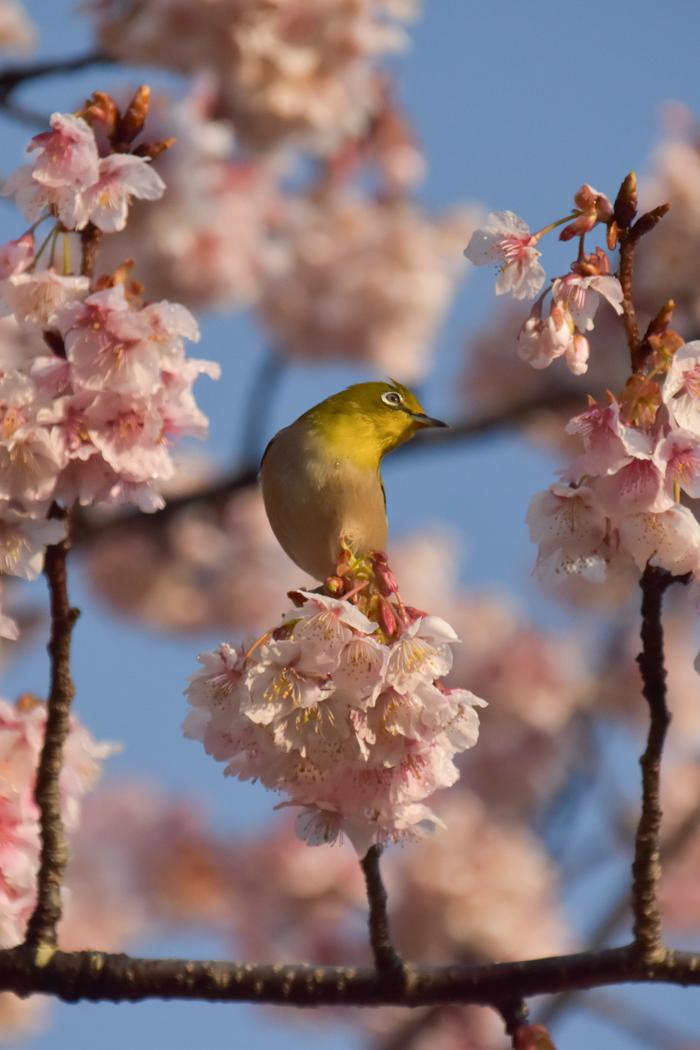 春らんまん♡ いきもの祭り~♪ (^o^)_c0049299_21414941.jpg