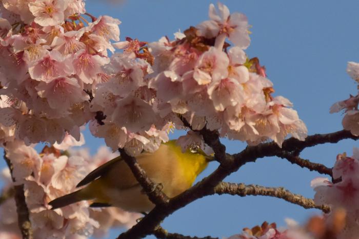 春らんまん♡ いきもの祭り~♪ (^o^)_c0049299_21421498.jpg