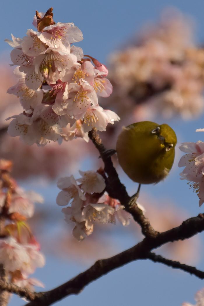 春らんまん♡ いきもの祭り~♪ (^o^)_c0049299_21430490.jpg