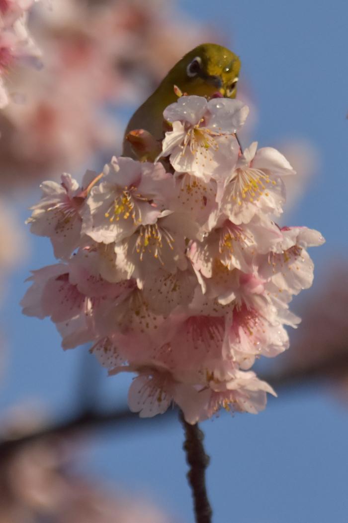 春らんまん♡ いきもの祭り~♪ (^o^)_c0049299_21435113.jpg