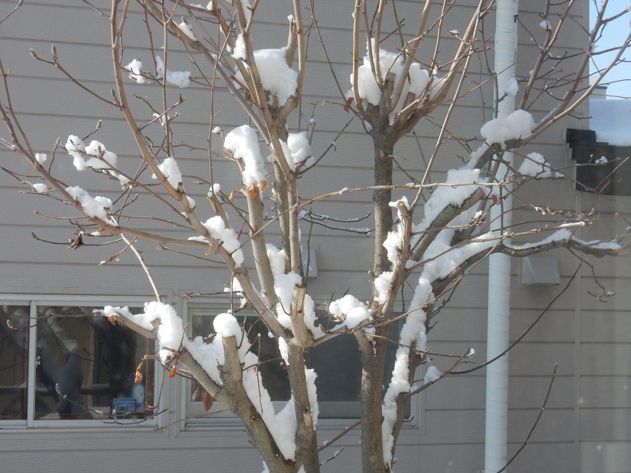 綿菓子のような雪の後、最高気温4.4℃_c0025115_21300082.jpg