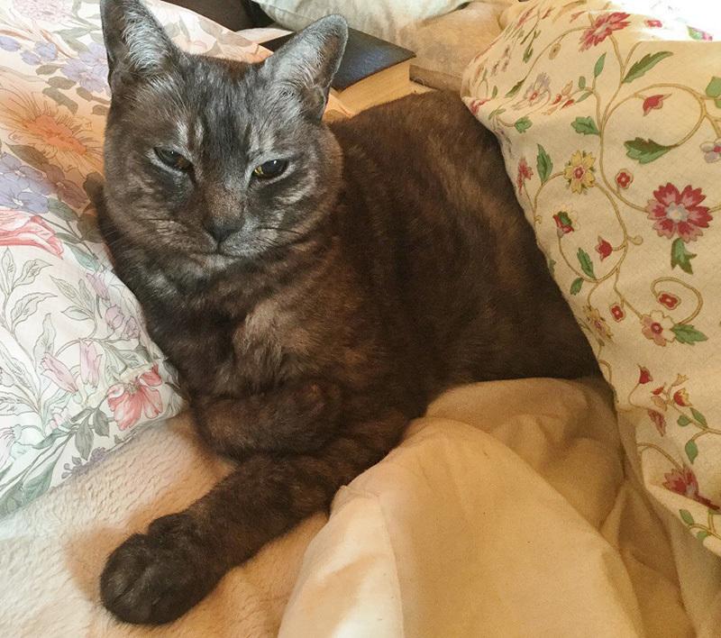 猫の日。カイトさん通信_a0021523_01165985.jpg