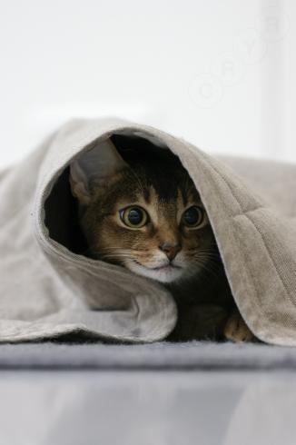 [猫的]ホットカーペットLOVE_e0090124_22065405.jpg
