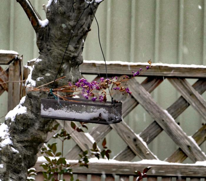 福島市自宅庭 「飛んできた野鳥」_d0106628_20130350.jpg