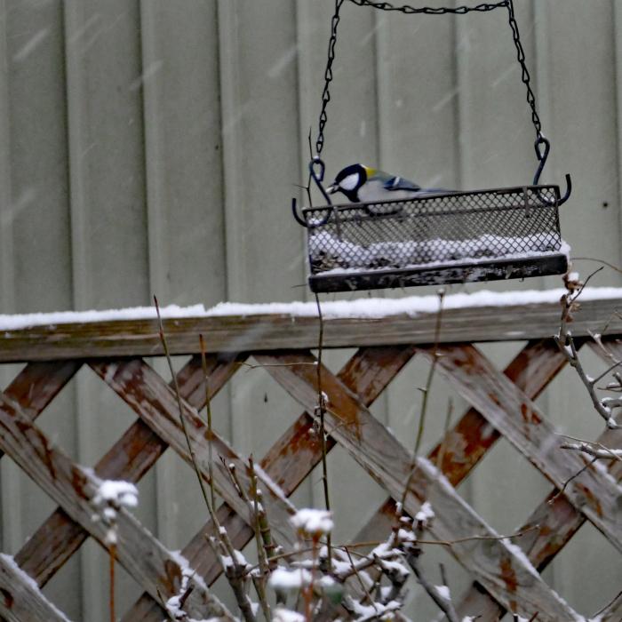 福島市自宅庭 「飛んできた野鳥」_d0106628_20131862.jpg