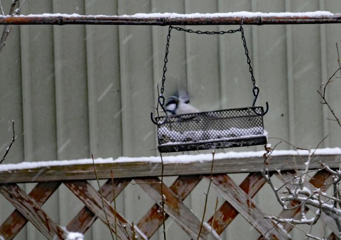 福島市自宅庭 「飛んできた野鳥」_d0106628_20135473.jpg