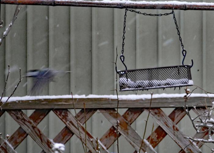 福島市自宅庭 「飛んできた野鳥」_d0106628_20144244.jpg