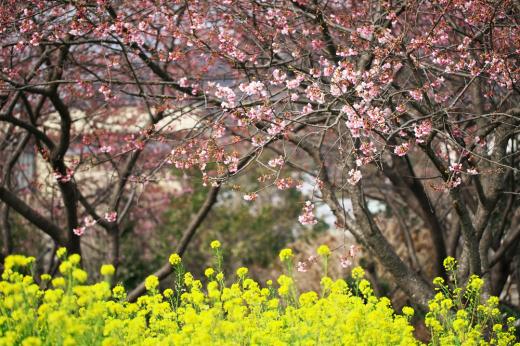 早春の散歩。_c0179360_16413773.jpg