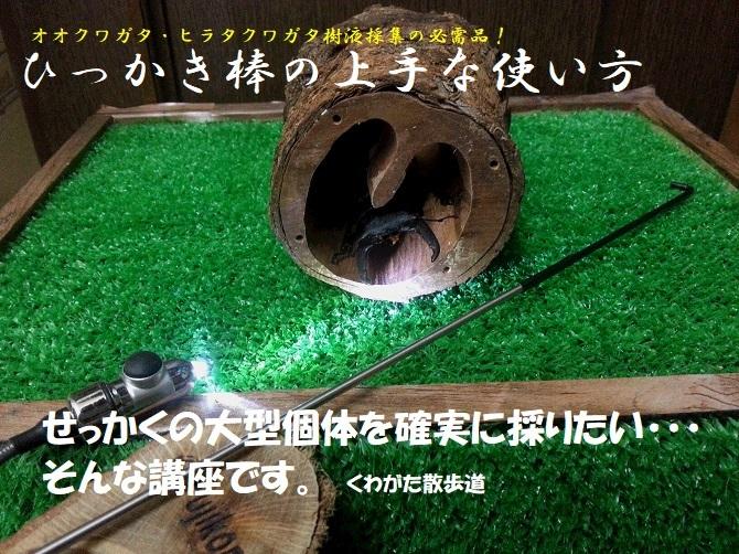 f0183484_12263810.jpg