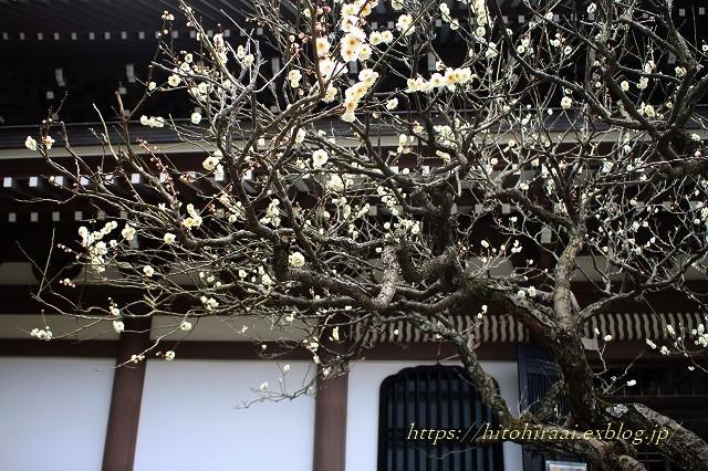 北鎌倉冬の花紀行 円覚寺~東慶寺(梅と椿)_f0374092_11130576.jpg
