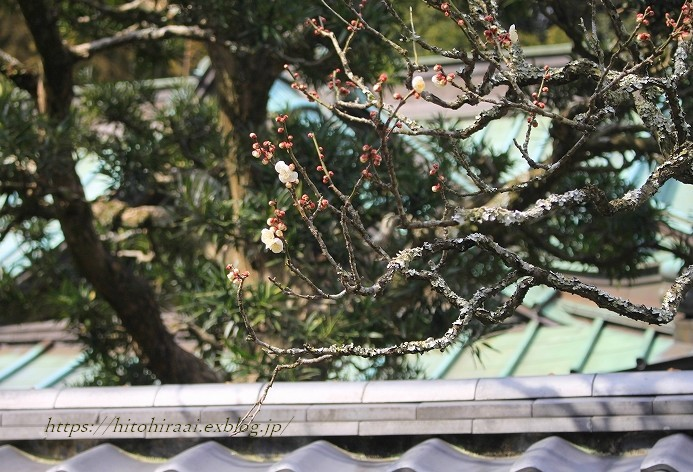 北鎌倉冬の花紀行 円覚寺~東慶寺(梅と椿)_f0374092_11450471.jpg