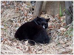 地域猫とやっと再会!そしてスズメ温泉とスミレのこと_d0221430_23403996.jpg