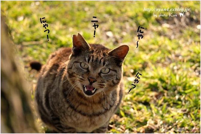 今日の外(=^・^=)さん_f0166234_01120483.jpg