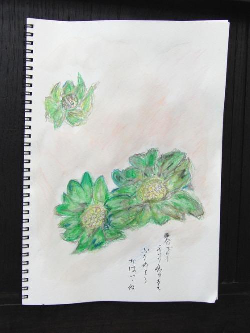 水彩画 ~ ふきのとう ~_e0222340_14554058.jpg