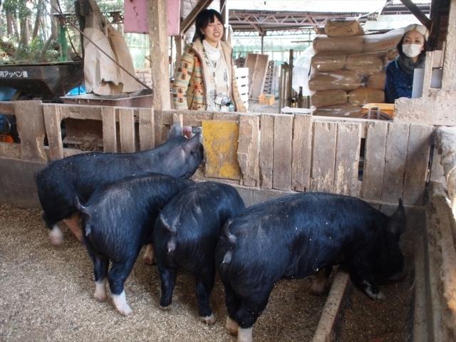 やさと農場の養豚~たいせつにしていること_c0177665_16165914.jpg