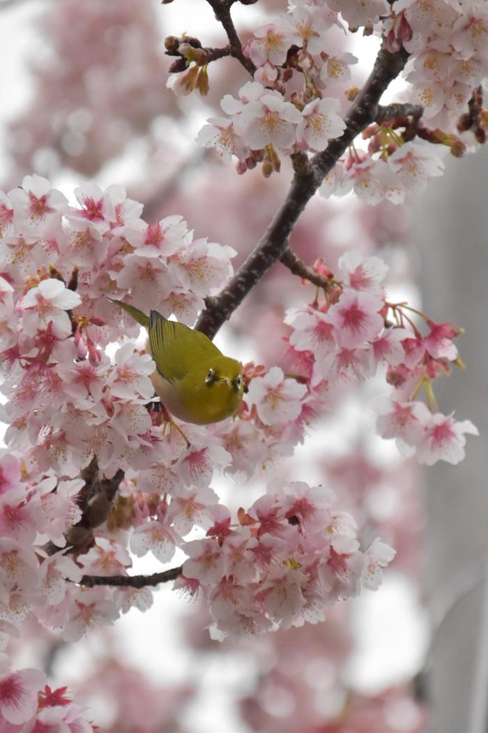 春らんまん♡ 年下の彼氏と・・・ (*^_^*)_c0049299_20544440.jpg