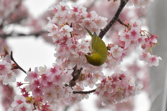 春らんまん♡ 年下の彼氏と・・・ (*^_^*)_c0049299_20555982.jpg