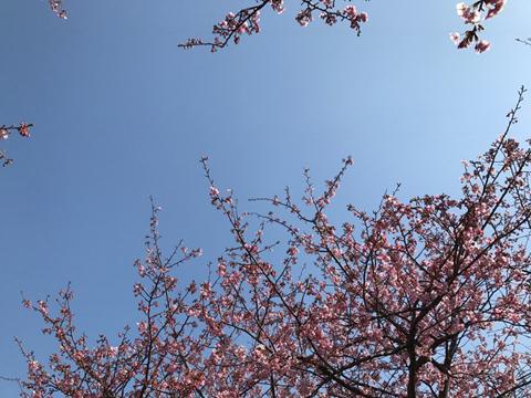 春の海_f0038600_21501111.jpg