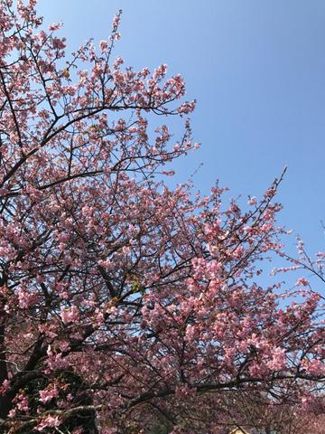 春の海_f0038600_21502157.jpg