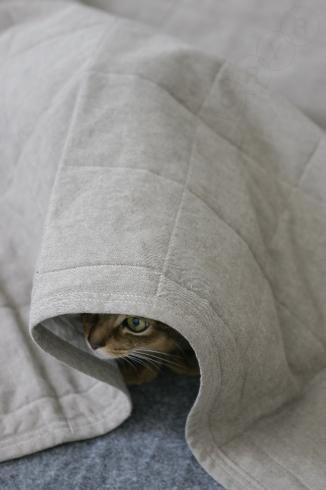 [猫的]仙人_e0090124_22563121.jpg