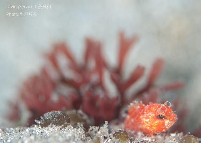 海藻と生物と浮遊系_b0163039_16113398.jpg