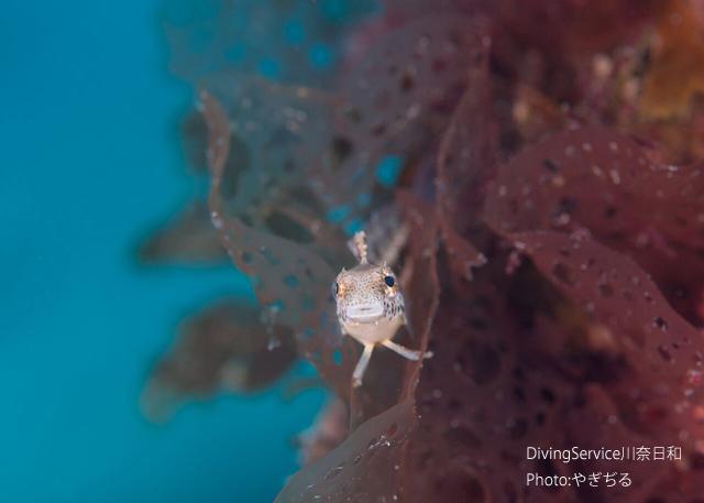 海藻と生物と浮遊系_b0163039_16114382.jpg