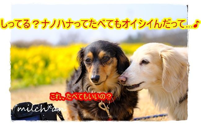 b0115642_17201276.jpg