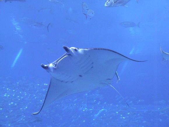 美ら海水族館!_a0268377_13295125.jpg