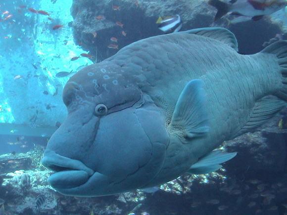 美ら海水族館!_a0268377_13295288.jpg