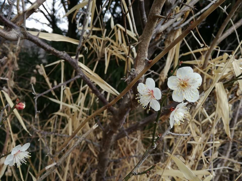 雪のない山レポート~2月の丹沢_d0198793_14280468.jpg