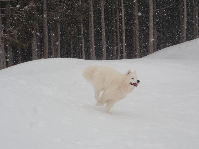 牧華 & 一色 雪遊び♪  1_a0049296_19594516.jpg
