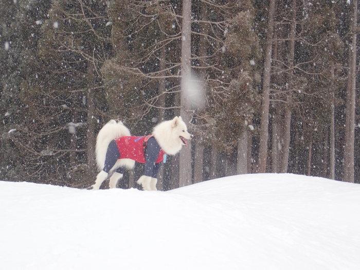 牧華 & 一色 雪遊び♪  1_a0049296_20002375.jpg