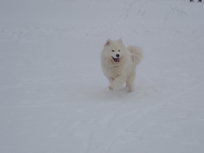 牧華 & 一色 雪遊び♪  1_a0049296_20010137.jpg