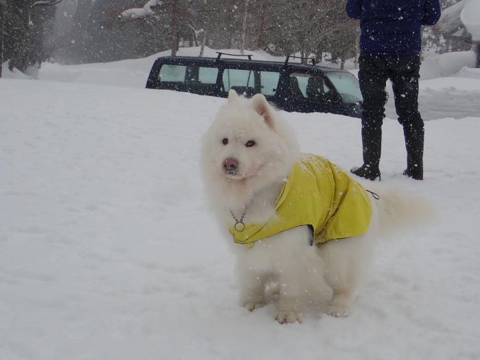 牧華 & 一色 雪遊び♪  1_a0049296_20021584.jpg