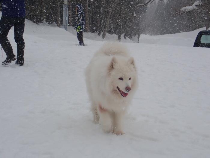 牧華 & 一色 雪遊び♪  1_a0049296_20024841.jpg