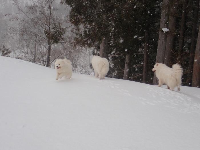 牧華 & 一色 雪遊び♪  1_a0049296_20044259.jpg