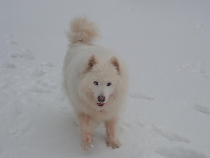 牧華 & 一色 雪遊び♪  1_a0049296_20105850.jpg