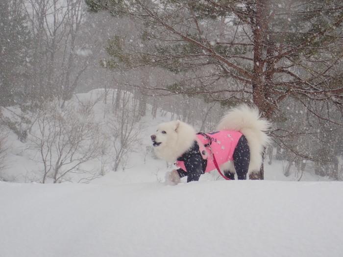 牧華 & 一色 雪遊び♪  1_a0049296_20113645.jpg