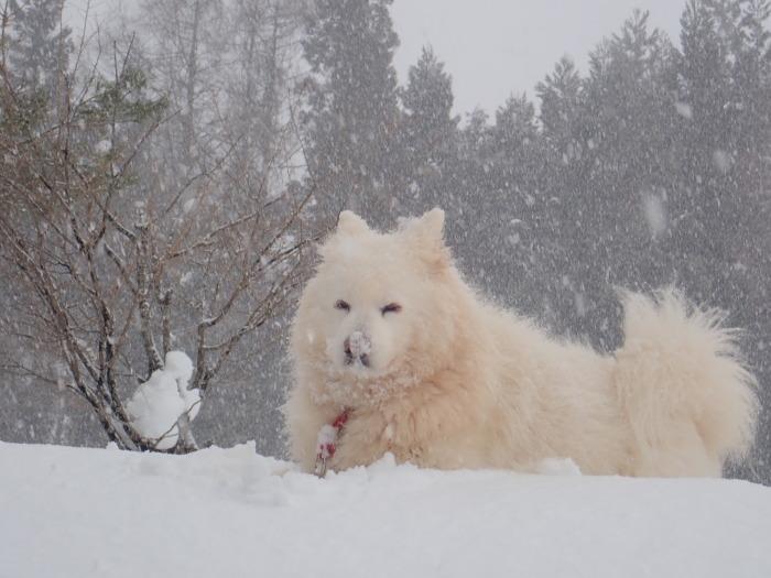 牧華 & 一色 雪遊び♪  1_a0049296_20121109.jpg