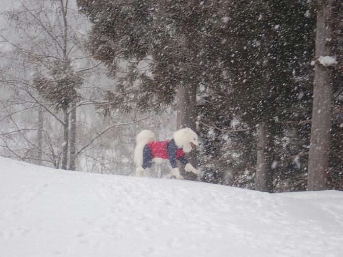 牧華 & 一色 雪遊び♪  1_a0049296_20124665.jpg