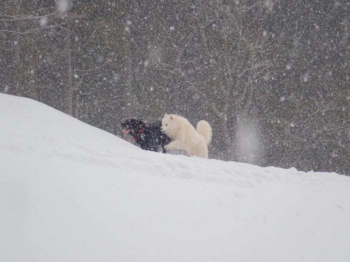 牧華 & 一色 雪遊び♪  1_a0049296_20132555.jpg