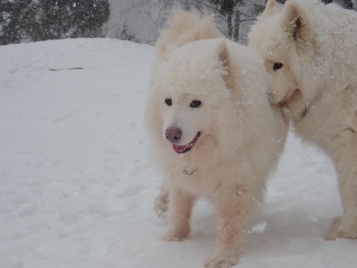 牧華 & 一色 雪遊び♪  1_a0049296_20153195.jpg