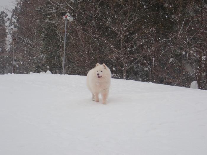牧華 & 一色 雪遊び♪  1_a0049296_20164125.jpg