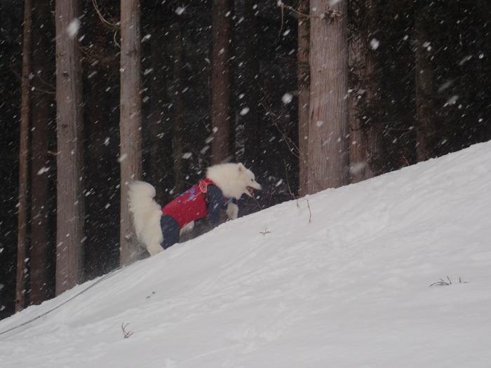 牧華 & 一色 雪遊び♪  1_a0049296_20173413.jpg