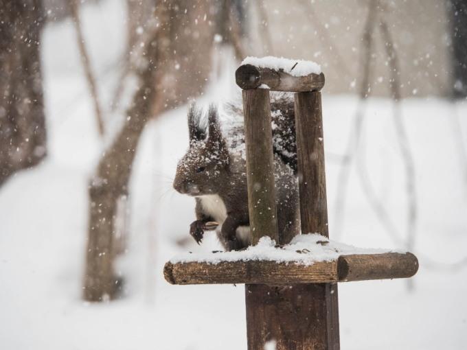 雪まみれのエゾリス君の後・・真っ赤なオオマシコさんがやって来ました。_f0276498_00370069.jpg